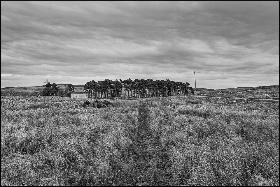black and white photograph of a farm amongst trees in Northumberland
