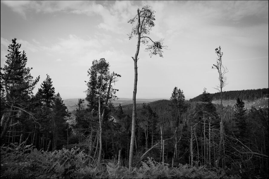 Looking Elsewhere: A simple forest photograph in black and white