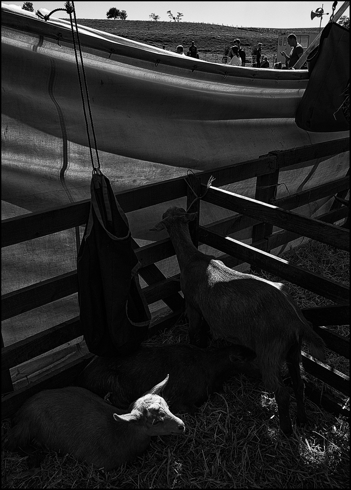 Glendale agricultural show street photography style black and white photos by Christophe Chevaugeon