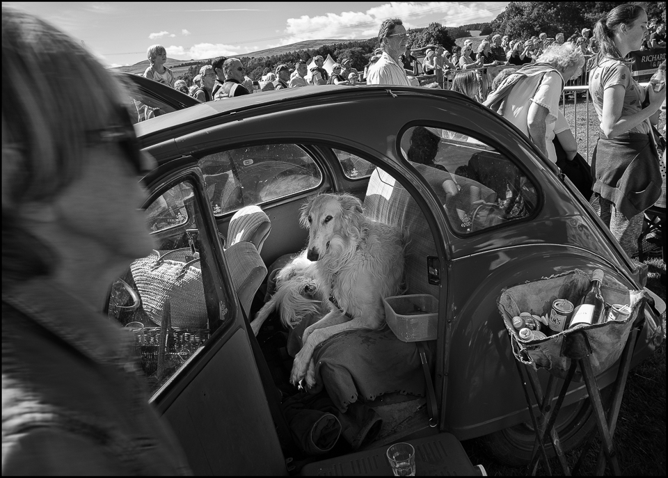 A dog in a deux Chevaux Glendale agricultural show street photography style black and white photos by Christophe Chevaugeon